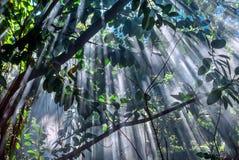 Selva-luz Fotos de archivo libres de regalías