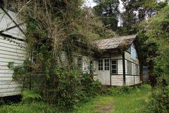 Selva malaia que recupera seu domínio no monte de Fraser Imagem de Stock Royalty Free