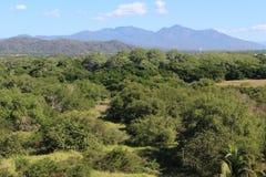 Selva mexicana Fotografia de Stock