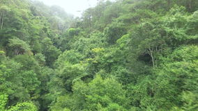 A selva na névoa video estoque