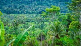 Selva nos Sidemen, Bali, Indonésia fotos de stock