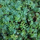 Selva pequena Foto de Stock