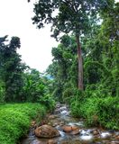 Selva & rio fotografia de stock