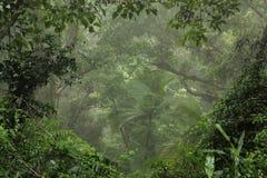 Selva tropical Fotografía de archivo libre de regalías