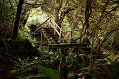 Selva tropical Imagenes de archivo