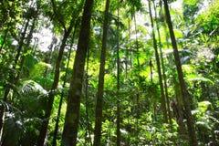 Selva tropical Imagen de archivo