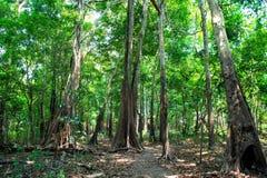 Selva tropical tropical adentro en Manaus, el Brasil Árboles con las hojas verdes en selva Bosque del verano en paisaje natural E foto de archivo