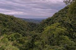Selva tropical andina Foto de archivo