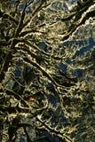 Selva tropical cerca del Monte Rainier en valle del paraíso en otoño imágenes de archivo libres de regalías