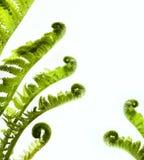 Selva tropical como marco en blanco con las plantas verdes del helecho Imagen de archivo