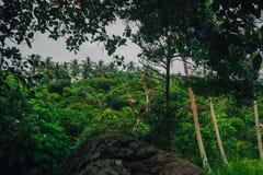 Selva tropical con el río Fotografía de archivo libre de regalías
