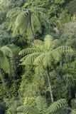 Selva tropical con los helechos de árbol Imágenes de archivo libres de regalías