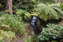 Selva tropical con los helechos y la cascada Imágenes de archivo libres de regalías