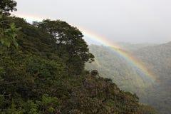 Selva tropical, Costa Rica Fotografía de archivo
