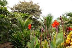 Selva tropical, Costa Rica Imagen de archivo