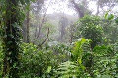 Selva tropical, Costa Rica Imagen de archivo libre de regalías