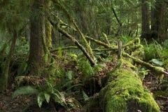 Selva tropical cubierta de musgo Imagen de archivo