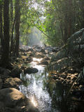 Selva tropical de Asia Fotografía de archivo