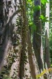 Selva tropical de Borneo Imágenes de archivo libres de regalías