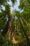 Selva tropical de Borneo Foto de archivo libre de regalías