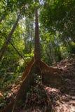 Selva tropical de Borneo Fotos de archivo