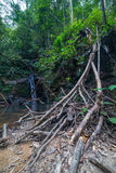 Selva tropical de Borneo Imagen de archivo