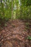 Selva tropical de Borneo Fotos de archivo libres de regalías