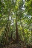 Selva tropical de Borneo Fotografía de archivo