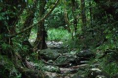 Selva tropical de Daintree Fotografía de archivo libre de regalías