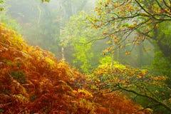 Selva tropical de Exmoor Foto de archivo libre de regalías