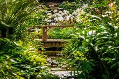 Selva tropical de imitación del jardín de la orquídea fotografía de archivo libre de regalías