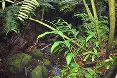 Selva tropical de la selva tropical como la determinación con mismo la vegetación del verde foto de archivo