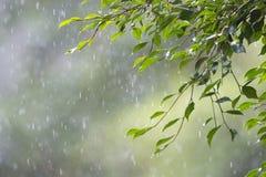 Selva tropical de la llovizna Fotografía de archivo libre de regalías