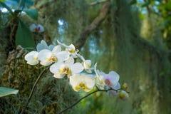 Selva tropical de la mañana Fotos de archivo