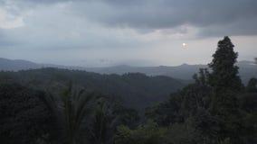 Selva tropical de la puesta del sol del bosque, naturaleza, tropical, árbol, ambiente, fondo, landscap almacen de metraje de vídeo