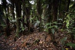 Selva tropical de Nueva Zelanda de Nueva Zelanda d Y fotos de archivo libres de regalías