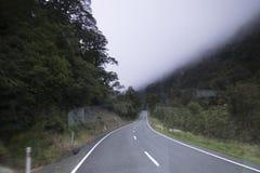 Selva tropical de Nueva Zelanda de Nueva Zelanda d Y foto de archivo