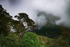 Selva tropical de Nueva Zelanda de Nueva Zelanda d Y fotos de archivo
