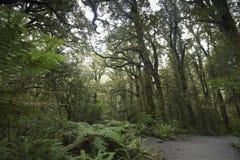 Selva tropical de Nueva Zelanda de Nueva Zelanda d Y imagen de archivo
