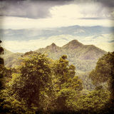 Selva tropical de Queensland Foto de archivo