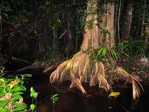 Selva tropical de Suriname en la noche Imagenes de archivo