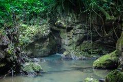 Selva tropical de Tailandia Imagen de archivo