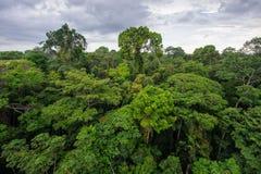 Selva tropical del Amazonas Imagen de archivo libre de regalías