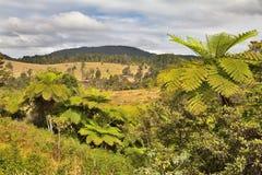 Selva tropical del helecho de árbol de Queensland Fotos de archivo libres de regalías