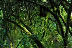 Selva tropical del Mt Kilimanjaro, Tanzania Fotografía de archivo libre de regalías