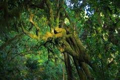 Selva tropical del Mt Kilimanjaro, Tanzania fotos de archivo