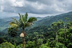 Selva tropical del nacional del EL Yunque Fotografía de archivo