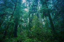 Selva tropical del noroeste americana Imagen de archivo libre de regalías