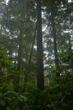 Selva tropical del noroeste pacífica imagenes de archivo
