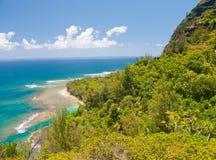 Selva tropical del océano y fotografía de archivo